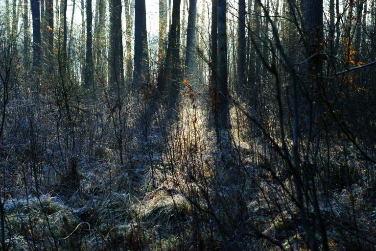 Las iczas #2. Przepis nabaśniowy las