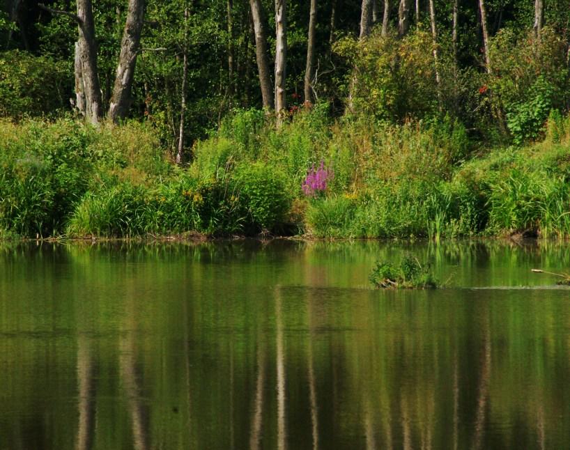 Rezerwat Wiączyń