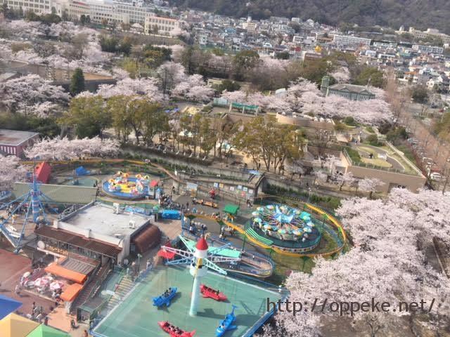 神戸王子公園 桜