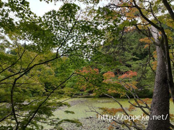 神戸森林植物園,長谷池