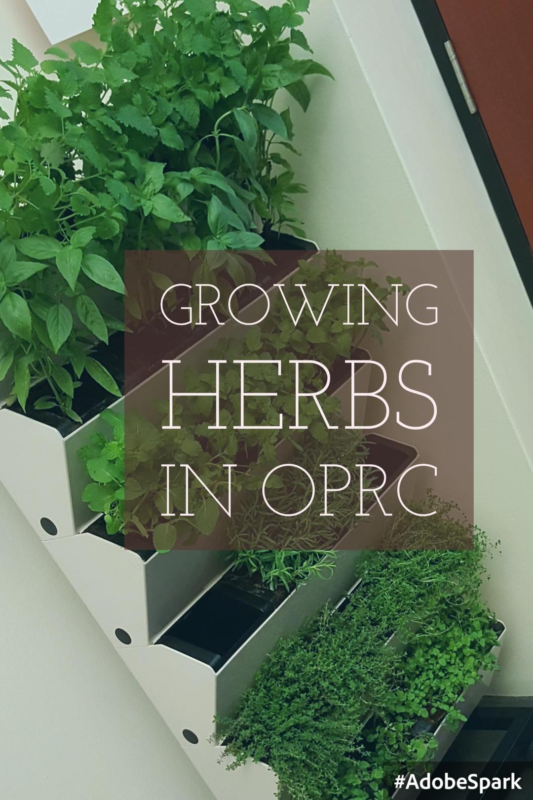 OPRC growing herbs in OPRC
