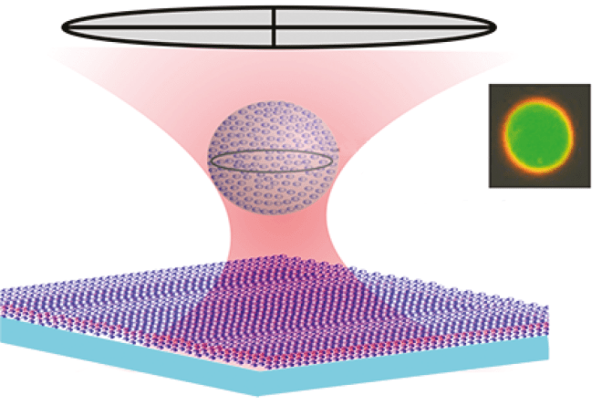 Fig. 18.1 — Optically trapped vesicle