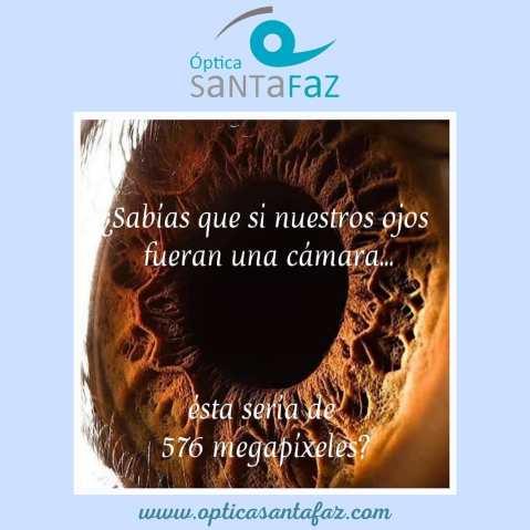 curiosidades-sobre-el-ojo-humano-www.opticasantafaz.com-optica-Santa-Faz