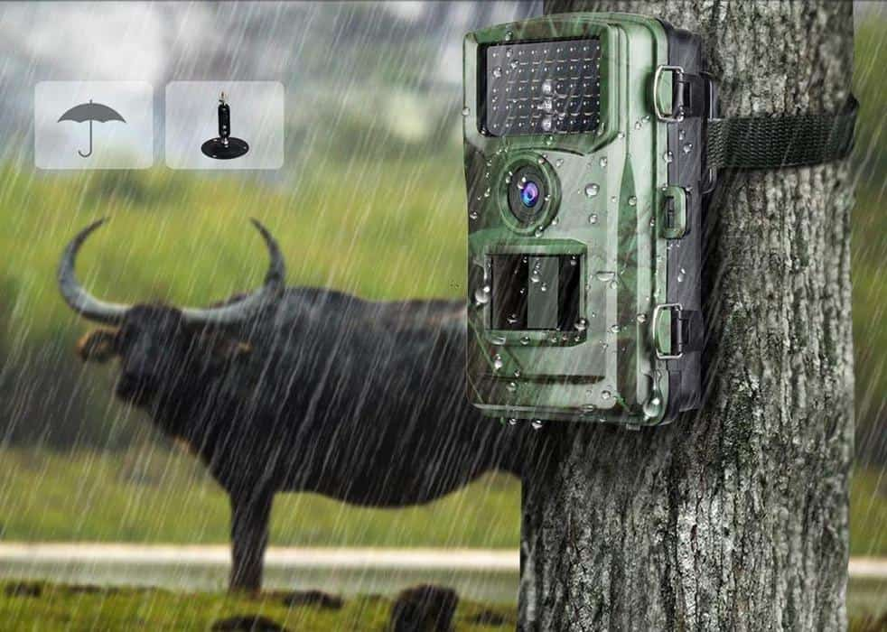Best Trail Cameras Under 150 Dollar