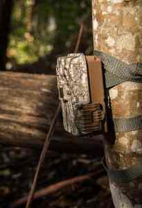 How To Aim A Trail Cam
