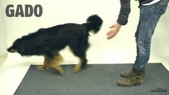 Фокусник баламосва кучета, реакциите им ще ви просълзят от смях