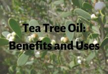 Tea Tree Oil- Benefits and Uses