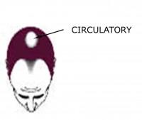 Hair Loss: Circulatory Issues