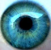 Blue Eye Iris