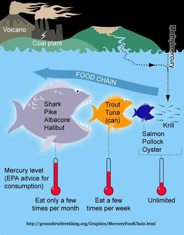 Mercury poisoning for Mercury content in fish