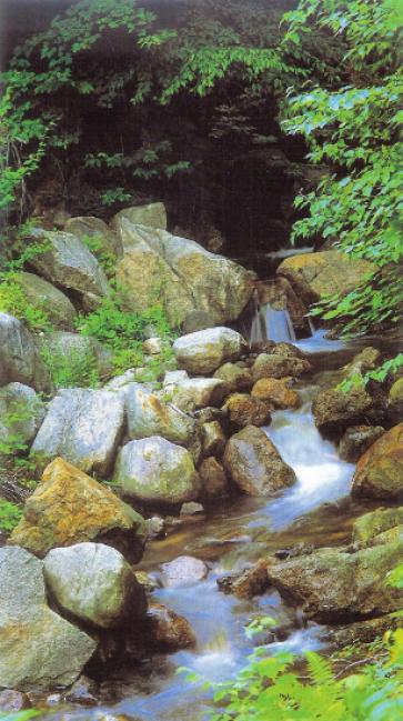 Peaceful Babbling Brook