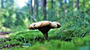 mushroom, nature, forest