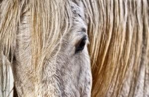 mold, horse, white