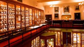 mutter-museum