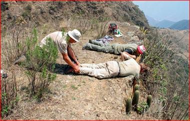 Cactus Explorers