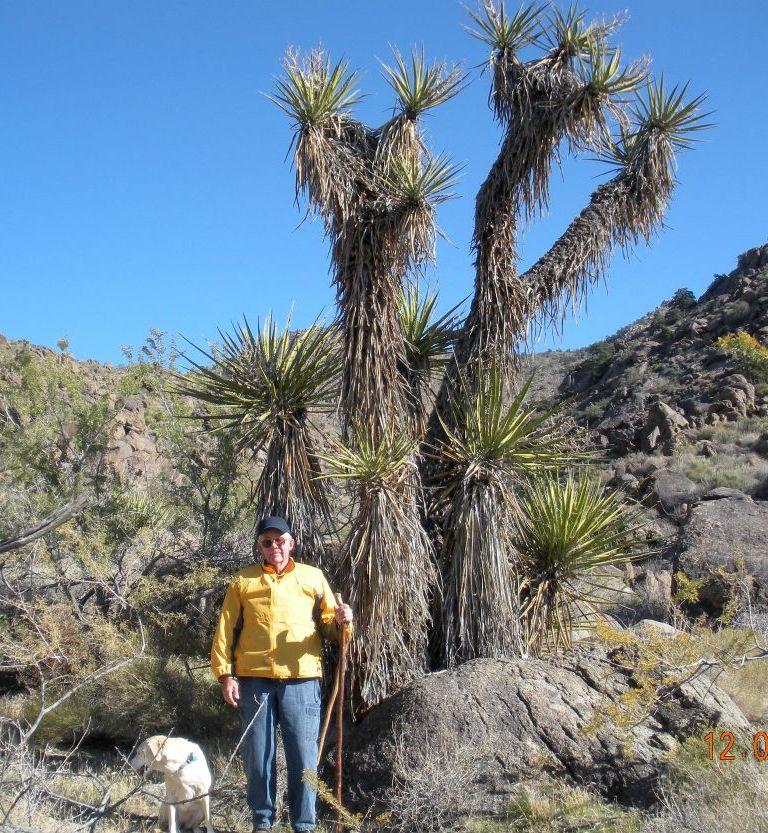 Three Arizona Yuccas