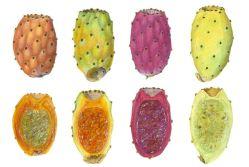 Fruit types