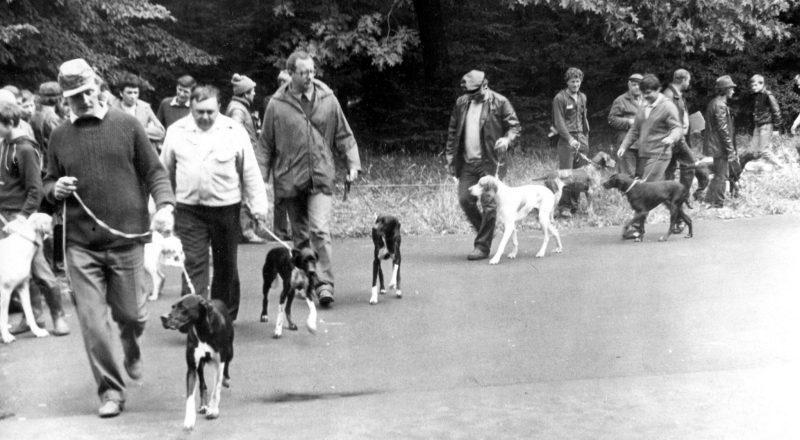 1985.07.07 Киев, Всеукраинская выставка охотничьих собак. Пойнтера, ринг сук. Первым идёт А. Стоячко.