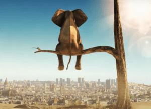Animal étranger : le feat de Yous MC avec Al Tarba !