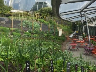 Food Garden