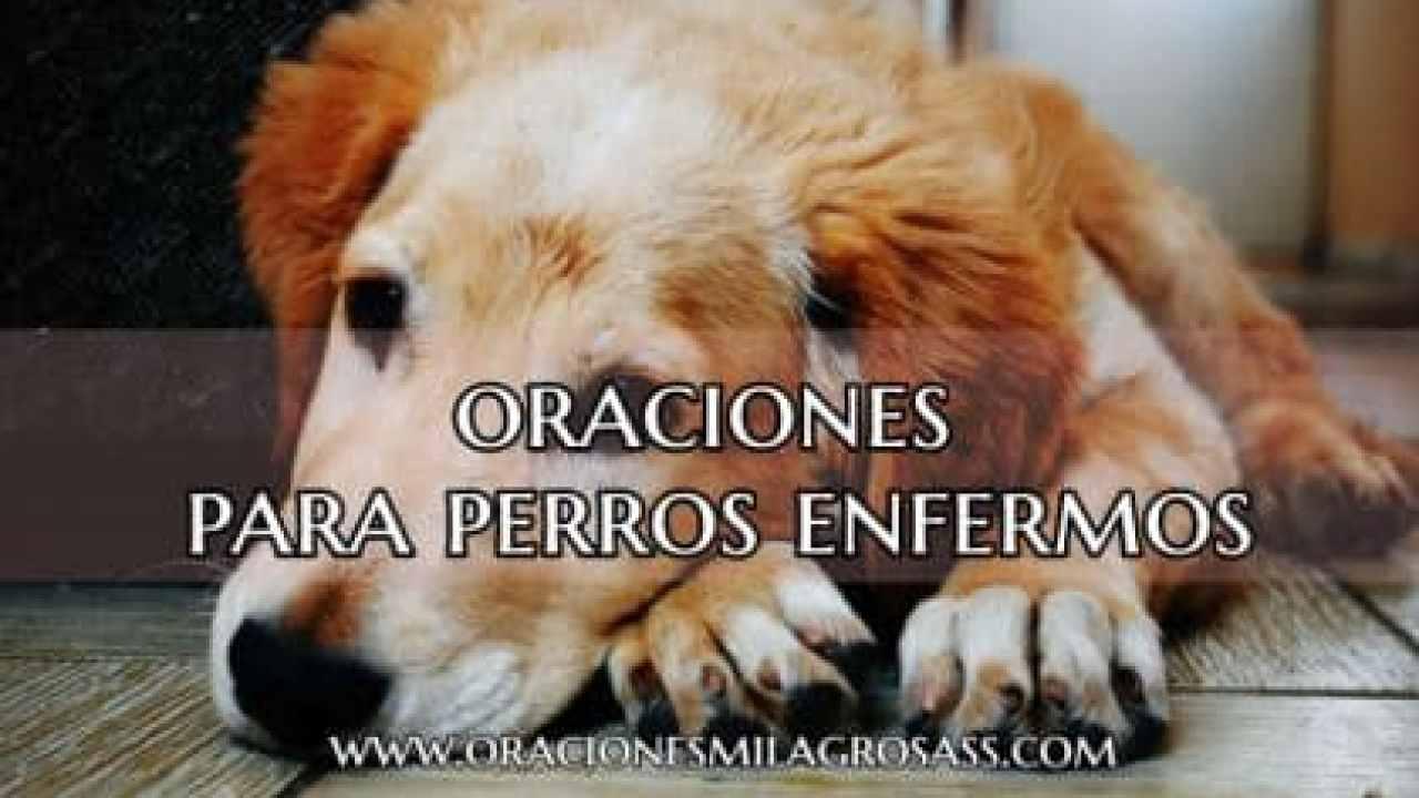 5 Poderosas Oraciones Para Perros Enfermos