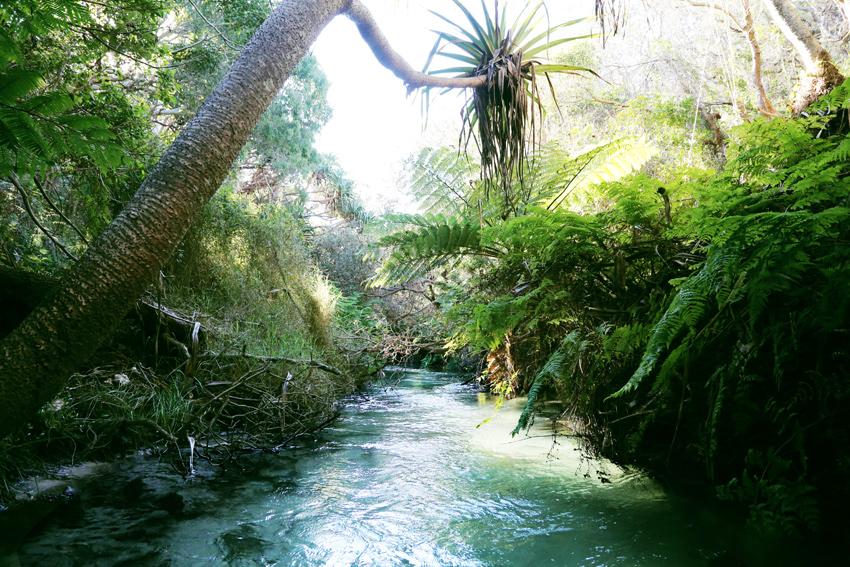 Havis-Eli-Creek.4