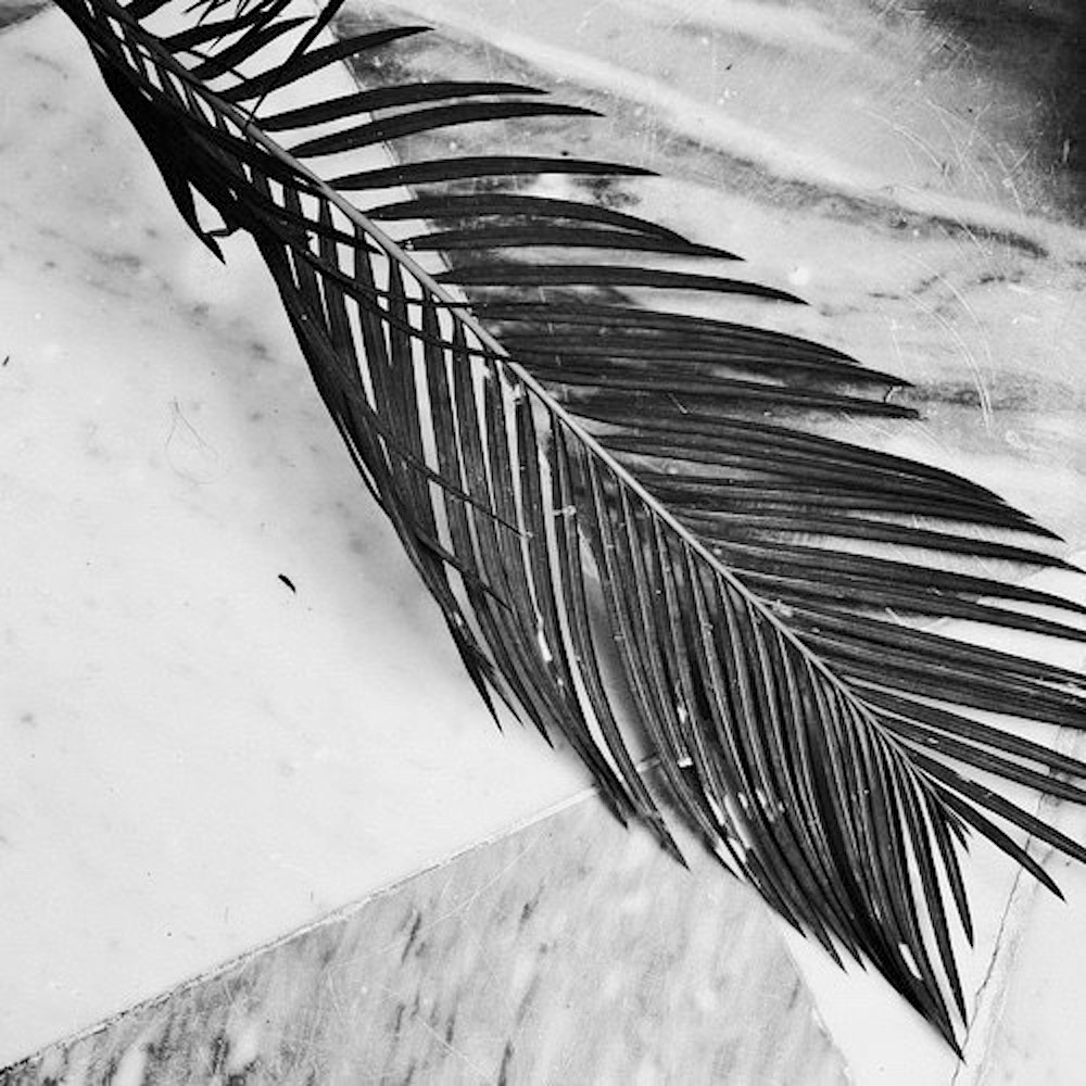 palm-leaf-heat-wave-inspiration-black-and-white-oracle-fox