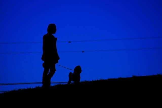 犬と夜のお散歩は危ない