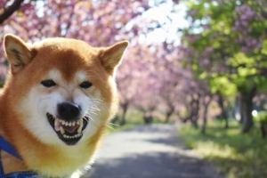 犬 保険 ペット保険