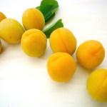 犬 あんず 杏子 杏 食べる 大丈夫 毒性 与える