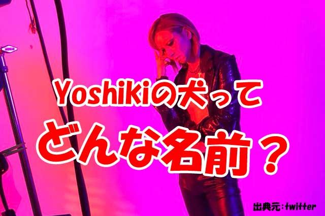 yoshiki 犬