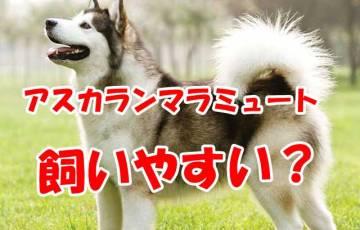 犬 アラスカンマラミュート