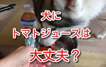 犬 トマト ジュース