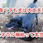 犬 土食べる