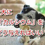 犬 カルシウム