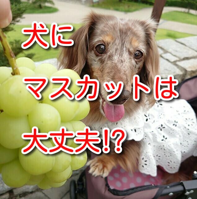 犬 マスカット