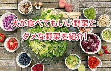 犬 食べ て いい 野菜