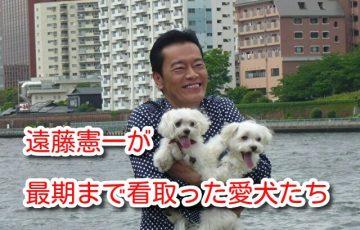 遠藤憲一 犬