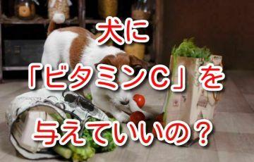 犬 ビタミンC