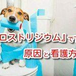 犬 クロストリジウム