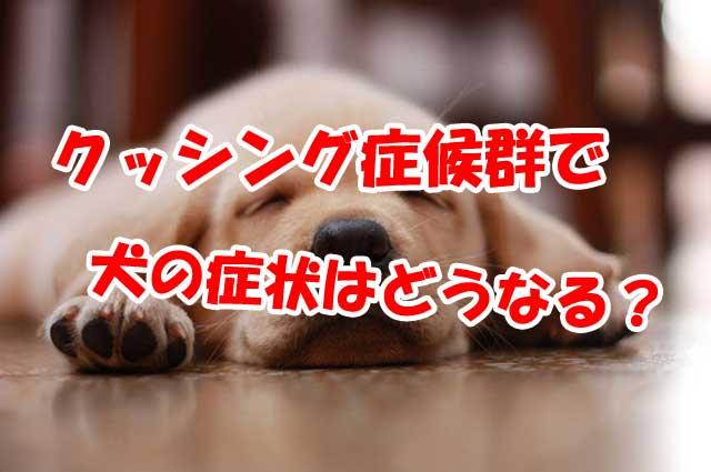 クッシング 症候群 症状 犬