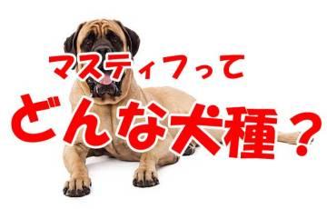 マスティフ 犬種