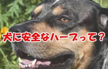 犬に安全なハーブって?