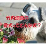 竹内涼真 愛犬 シュナ