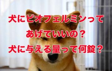 ビオフェルミン 犬