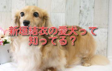 新垣 結衣 犬