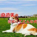 佐良直美 愛犬