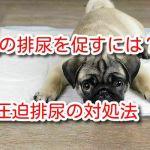 犬 排尿 促す