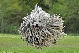プーリー 犬 モップ
