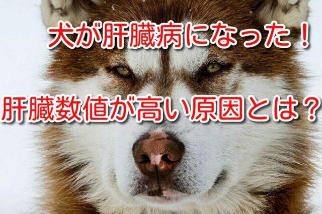 犬 肝臓 病